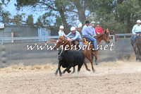 BraidwoodCampdraft2014_2732