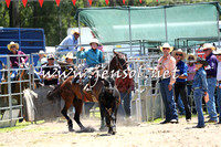 PictonRodeo2015_0030